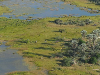Elephants seen from a flight over the Okavanga Delta.