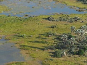 Elephants seen from a flight over the Okavanga Delta.